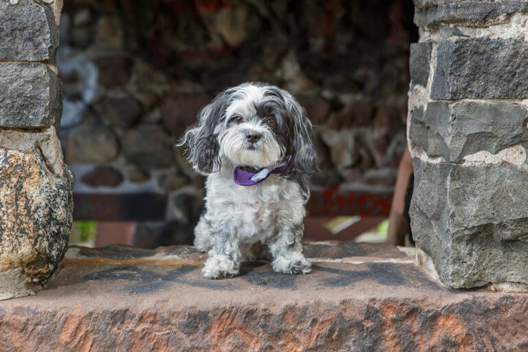 new Jersey Pet Photography